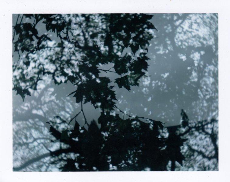 2017.kapplen. Bath Circus trees x2