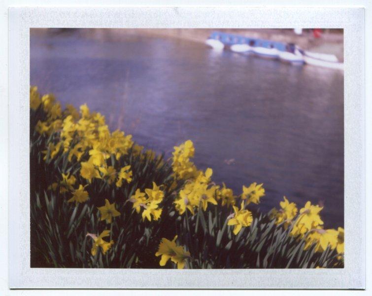 Daffodils on St Davids Day Bath